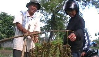 pedagang belalang jelang lebaran di Semanu